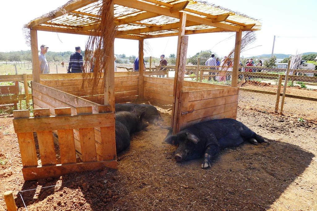 Vista la granja Can Pere Mussona Ibiza